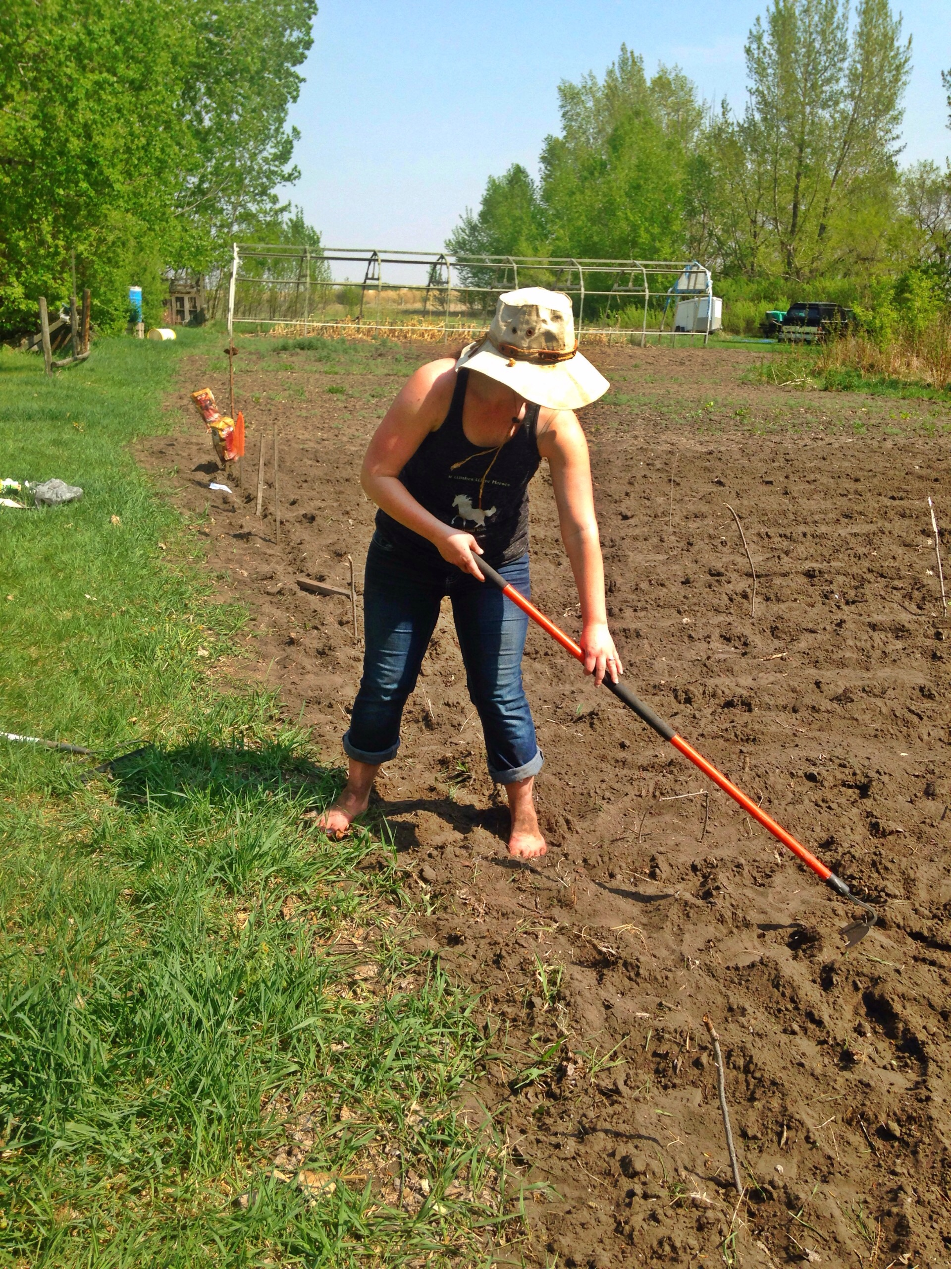 Cold-Climate Vegetable Gardening for the Complete Beginner