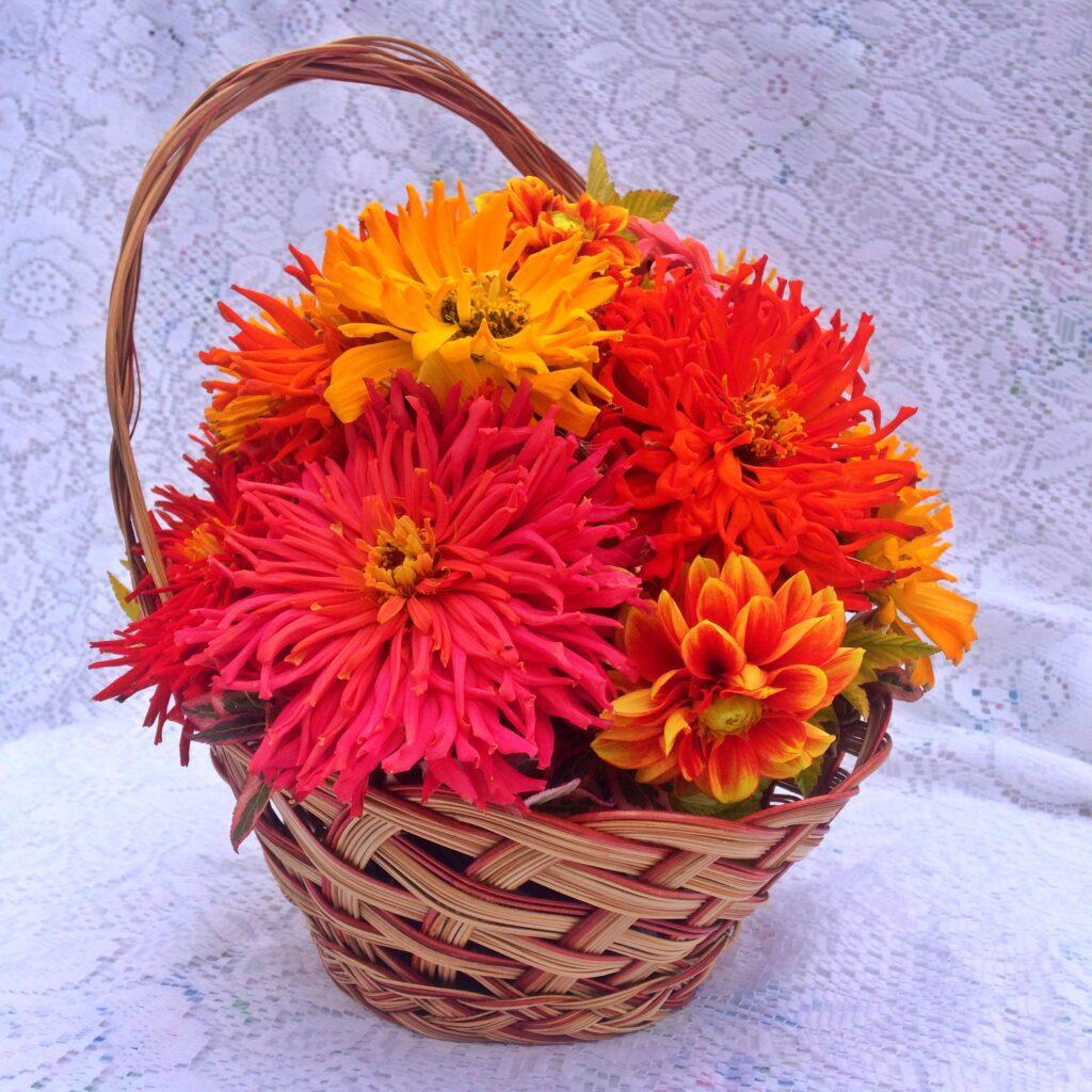 zinnias in a basket, zinnia, flower, DIY flowers,