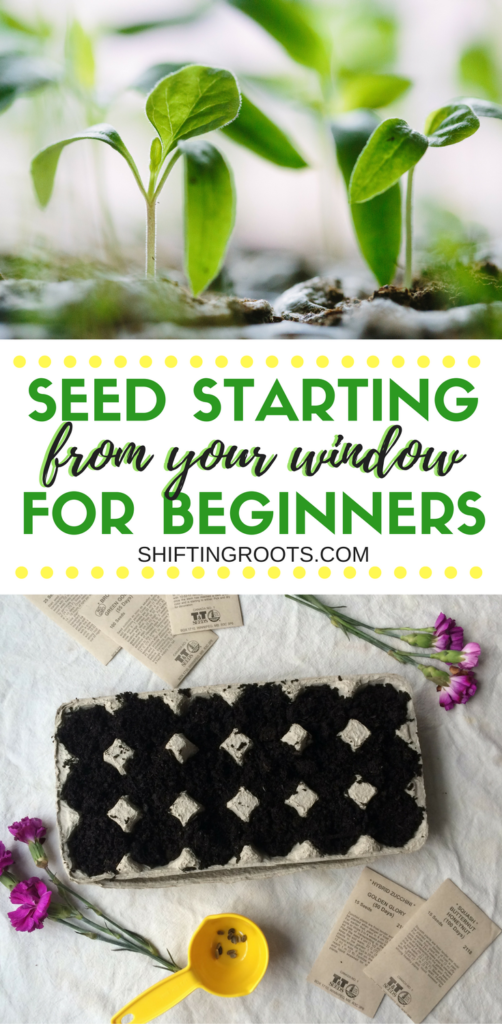 Learn how to start vegetable and flower seeds right from your window! I've compiled some easy seed starting tips for the beginner gardener to have you growing plants in your home using DIY containers. No need for fancy equipment! #gardening #seedstarting #seeds #vegetable #flower #fromyourwindow #diy #beginnergardener #easy
