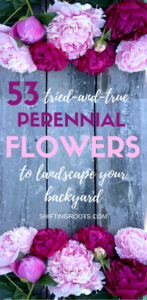 Build a low maintenance flower bed in your back yard or front yard with these 53 perennial flower and shrub plant ideas. Perfect for the beginner gardener landscaping a flower garden in USDA hardiness zone 3 (although these picks will work in many other zones as well!). Quickly add curb appeal on a small budget! #flowergarden #landscaping #gardening #perennials #flowers #curbappeal #backyard #frontyard