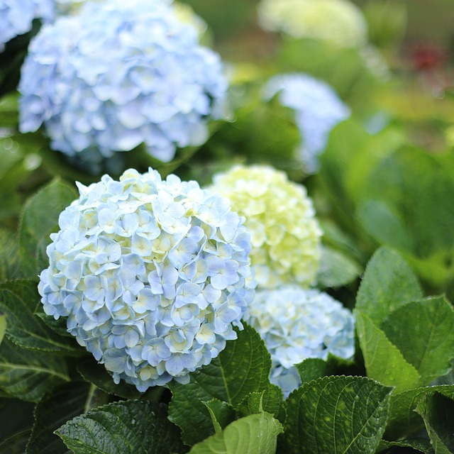 53 favourite perennials to plant in zone 3 shifting roots for Gardening zones ontario