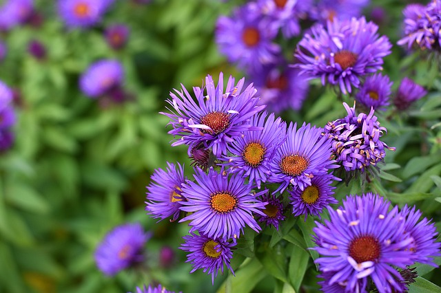 5 Benefits to Landscaping with Low Maintenance Native Plants