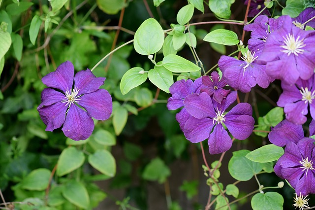 53 favourite perennials to plant in zone 3 shifting roots