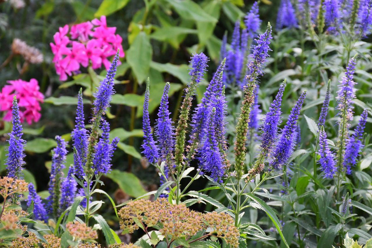 Gardeners Worst Nightmares 28 Perennials Youll Regret Planting