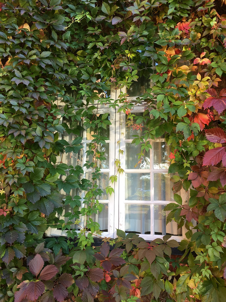 Gardeners Worst Nightmares: 28 Perennials You'll Regret Planting