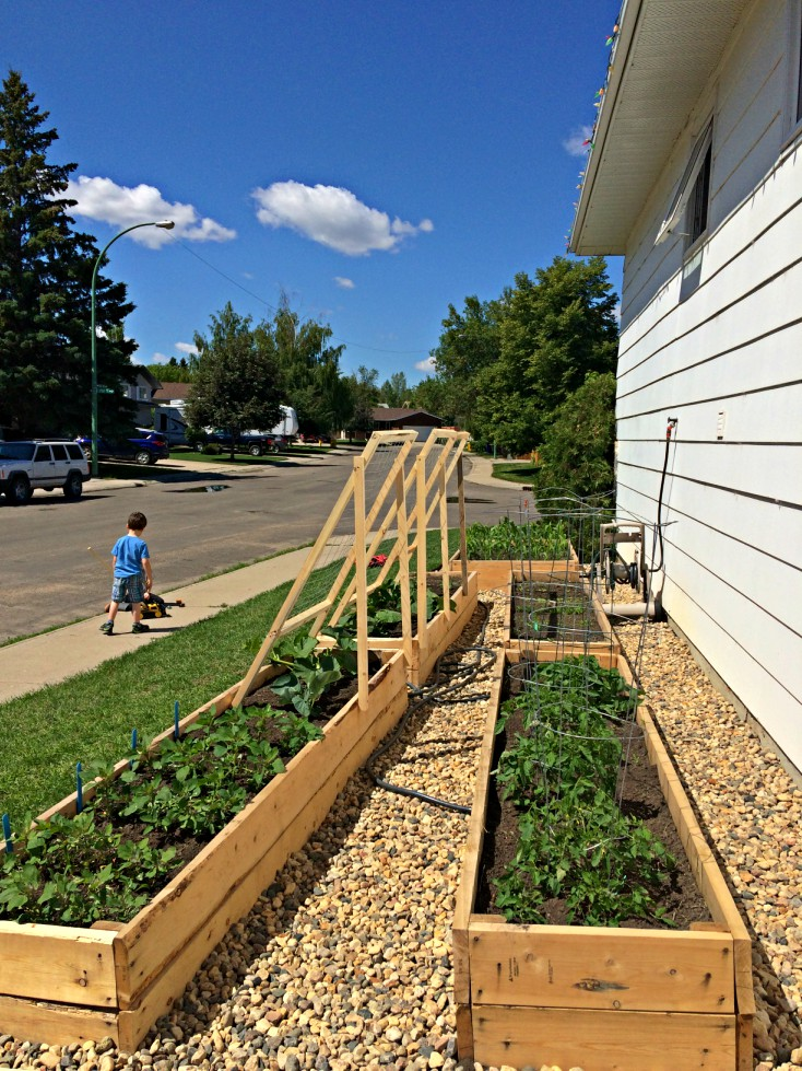 Grow an urban garden in your useless side yard.