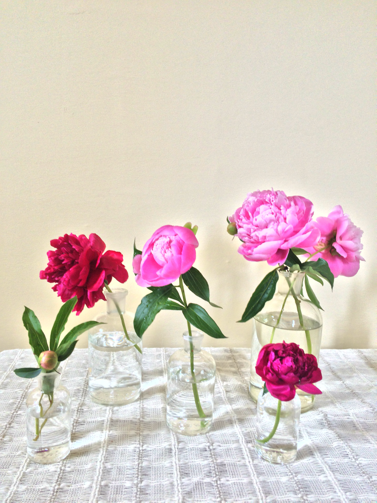 Beginners Guide To Peonies Growing Tips And Beautiful