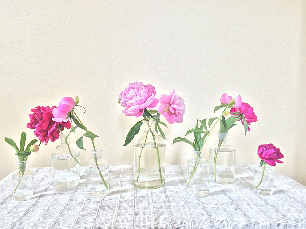 For two weeks every summer I am blessed with gorgeous pink and white peonies. Learn how to grow beautiful peonies in your front yard, the best way to cut them, and how to store them for later. Lots of DIY ideas including bridal bouquets, wedding flowers, fun arrangements, and even some beautiful floral hoop wreaths.