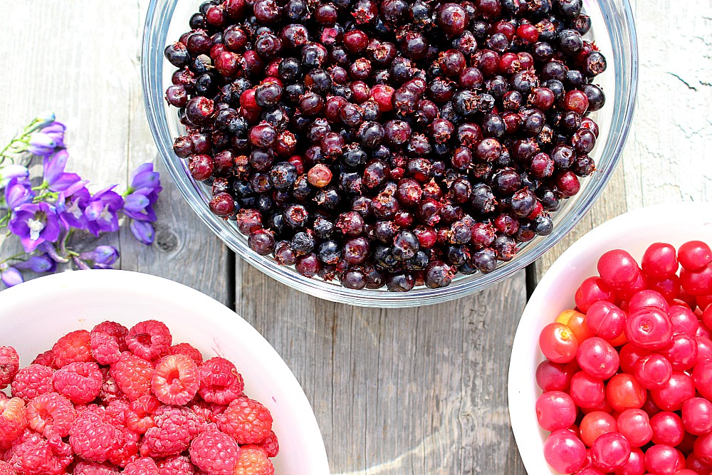 Planning to harvest fresh berries this summer?  Before you start canning, freezing, and preserving your berries, read this first to make the whole process easier--especially if you're a beginner! #berries #summerberries #canning #harvesting #preserving #freezing #foodstorage #preservingfood #canning101