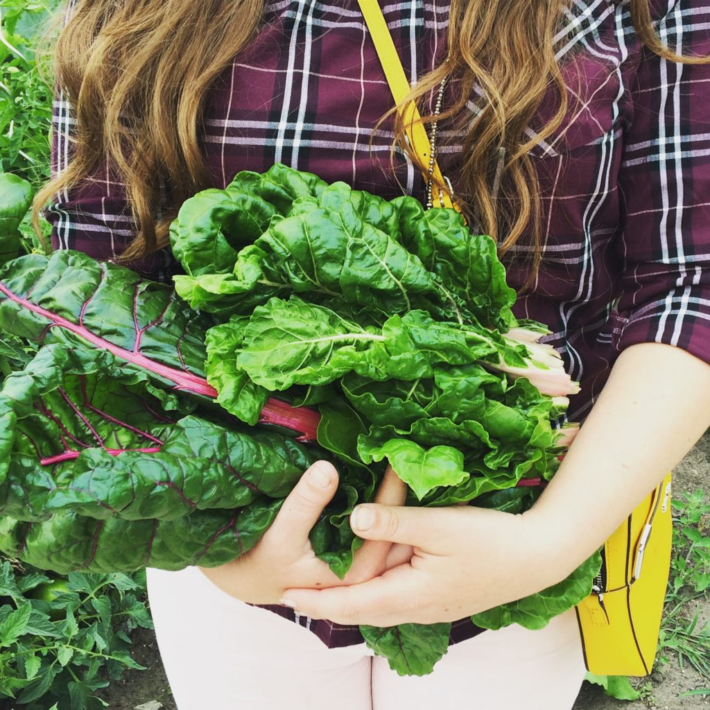 Planting your first garden?  Here's 10 of the easiest and best vegetables for beginners to grow, plus 5 surprisingly hard ones to avoid. P.S. You'll want to add Swiss Chard to your list!  #gardening #beginner #ideas #vegetables #vegetablegarden #garden #swisschard