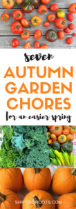 Fall is here and it's time to clean up your garden. I'm sharing the seven Autumn garden chores I do to make things easier in the spring. Divide perennial flowers, harvest vegetables, and prepare your soil for your best garden yet next year. Disclaimer: I live in Canada and garden in zone 2/3, so my tips and advice are based on that region.