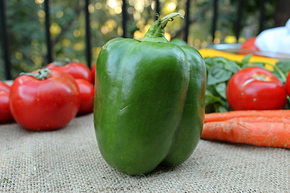 Growing peppers from seed doesn't have to be an impossible task!  Even a beginner can grow lots of peppers in their vegetable garden.  Here's my best pepper growing tips for healthy plants, and good pepper yields!  #peppers #gardening #tips #vegetable