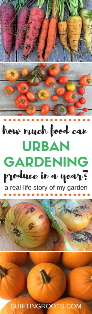 Have you ever wondered how much you can really grow in your urban garden? It might be more than you think! I'm sharing the results of growing vegetables in a tiny garden plot, on my patio in pots, and in a few garden boxes. #urbangardening #gardening #growingvegetables #smallspacegardening #citygardening