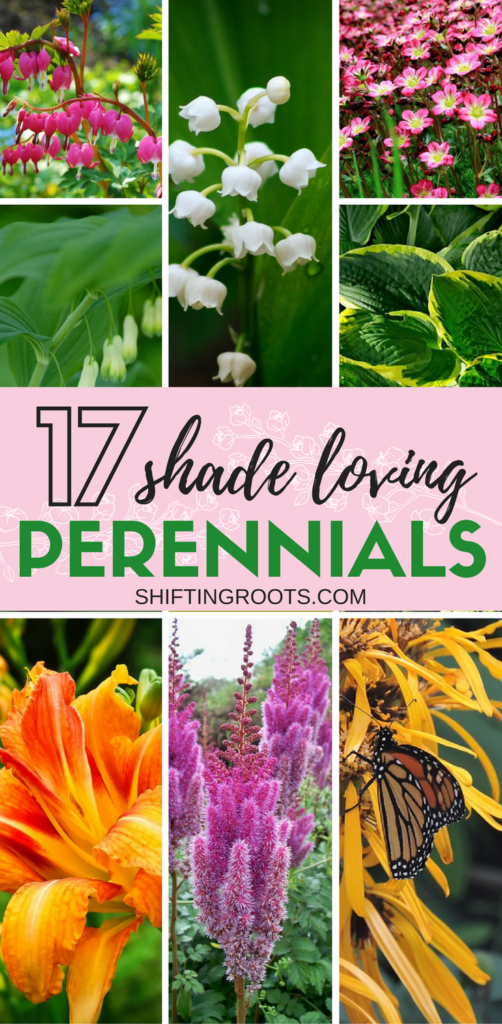 17 perennial flowers that love shade need some landscaping ideas for your shady flower bed front yard or backyard mightylinksfo