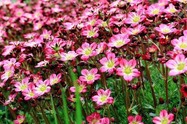 17 Perennial Flowers That Love Shade
