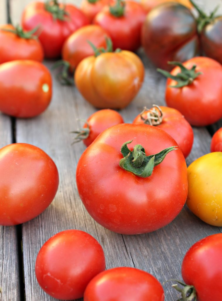 I love growing tomato plants, but it can be hard to know what tomato variety is best. I've rounded up the best varieties for beginners, container growing, making sauce, and more. You'll love these heirloom and hybrid picks for your garden or in pots. #growingtomatoes #tomato #gardening #heirloomtomatoes #containergardening #tomatovarieties #seedstarting #vegetable gardening
