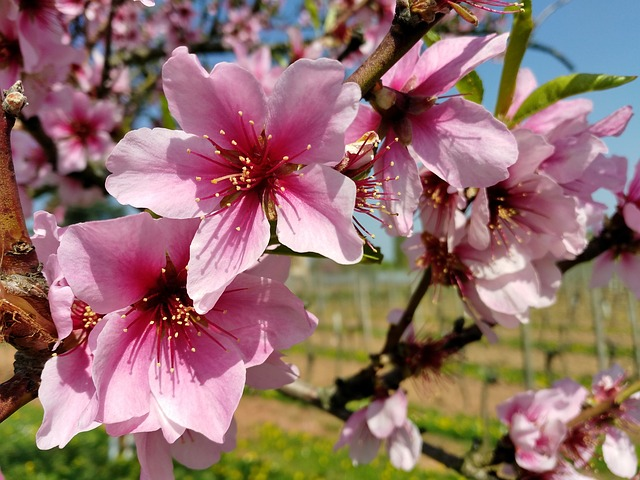 23 beautiful spring blooming perennial flowers trees and for Paesaggi di primavera per desktop