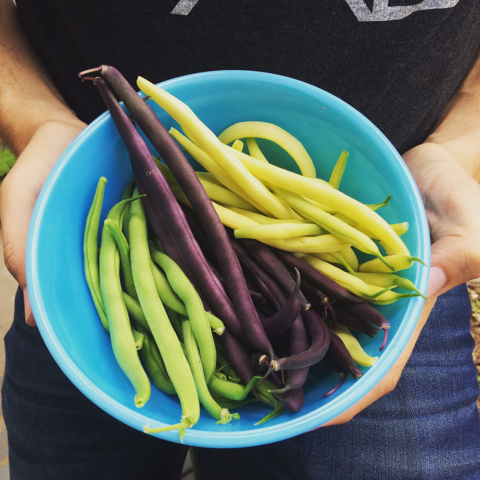 Planting your first garden?  Here's 10 of the easiest and best vegetables for beginners to grow, plus 5 surprisingly hard ones to avoid. P.S-These green, purple, and yellow beans are practically no-fail!  #gardening #beginner #ideas #vegetables #vegetablegarden #garden #beans