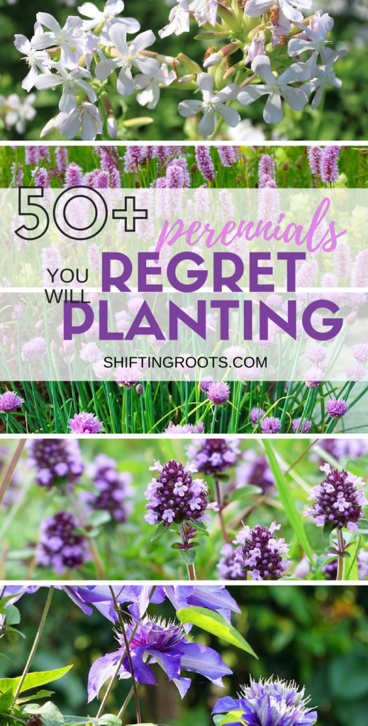 Perennial flowers are the heros of the low maintenance flower bed. However, some perennial flowers can easily grow out of control. Here's 50 plants you'll want to keep out of your garden, especially if you're a beginner. #gardening #flowergarden #perennial #flowers