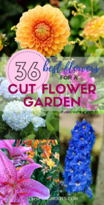 Would you like to grow a flower garden full of fresh cut flowers? Me too! I've compiled a list of the best perennials and annuals for beginners. You'll have lots of ideas of what to plant for all your floral arrangements that you just might run out of vases! #cutflowers #cuttinggarden #flowergarden #perennials #annuals #freshflowers #floralarrangement #floralarranging #gardening