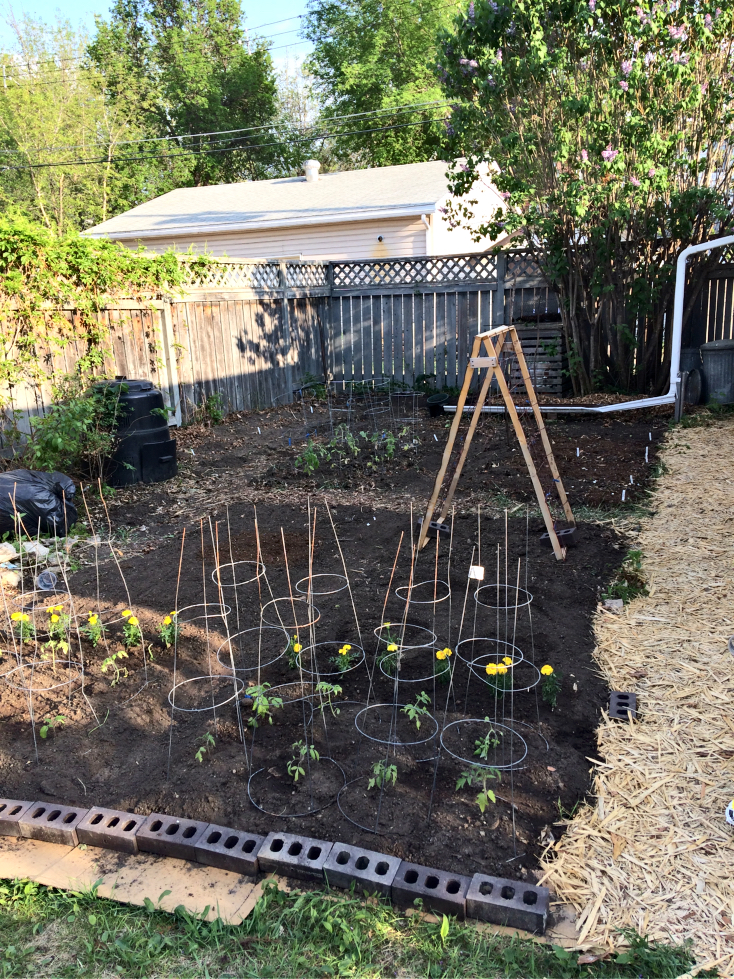 Check out my small space backyard vegetable garden.  It's amazing how much you can grow using the square foot gardening method and a bit of vertical gardening. #smallspace #gardening #backyard #vegetable #garden