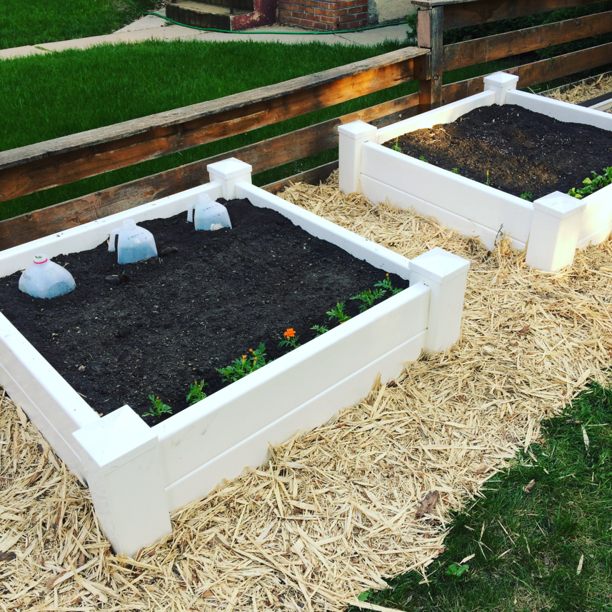I love my vinyl raised beds in my front yard.  They make square foot gardening so easy!  I'll show you how I make it work in my small space, plus give you some ideas and plans for what to plant in it. #raisedbeds #squarefootgardening #containergardening #beginnergardening #easygardening #gardening #vegetablegardening