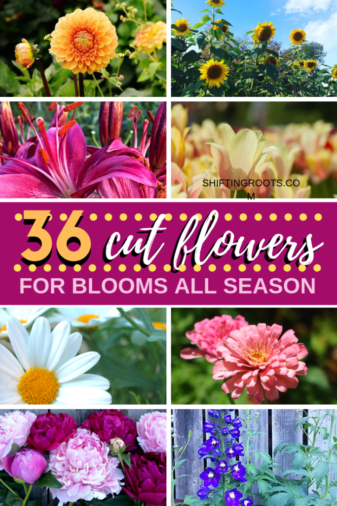 Yes!  You can create a cut flower garden for floral arranging all season long.  Here's the perfect flower ideas to design your garden, even if you're a beginner.  Bonus!  Most of the pics are perennials! #flower #garden #cut #ideas #forbeginners