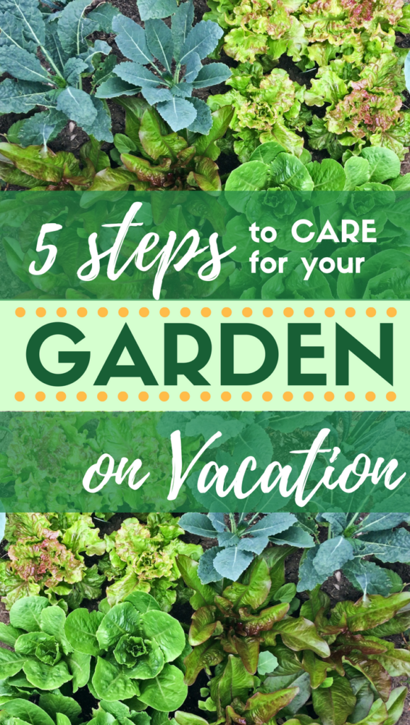 Every Gardener Faces This Dilemma At One Point: How Do You Go On Vacation  Without