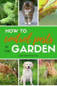 You've planted a beautiful vegetable garden or flower bed and now common pests are ruining everything!! I'll give you tips for how to get rid of or control insects, rodents, cats, dogs, deer and more. #gardening #gardenpests #insects #cats #dogs #deer #bugs #rodents