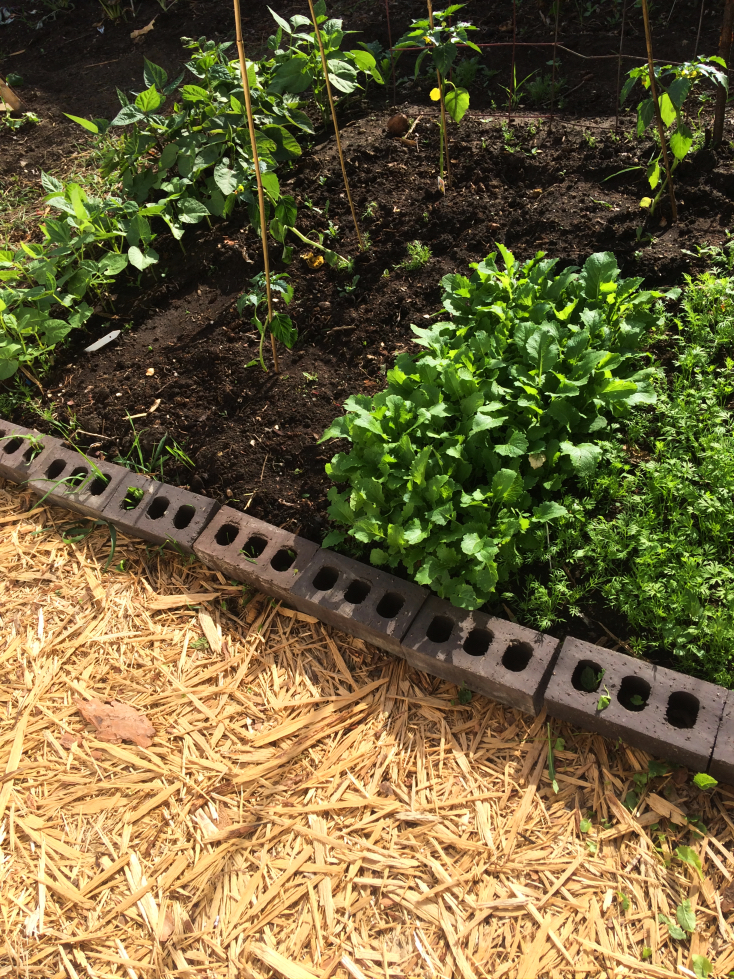 Do you wish there was a low maintenance way to keep weeds and grass out of your garden?  Mulch is the answer!  Keep weeds out of your landscaping, vegetable garden, pathways, around raised beds and more! #gardening #mulch #mulching #gardeningtips #weeds #weeding