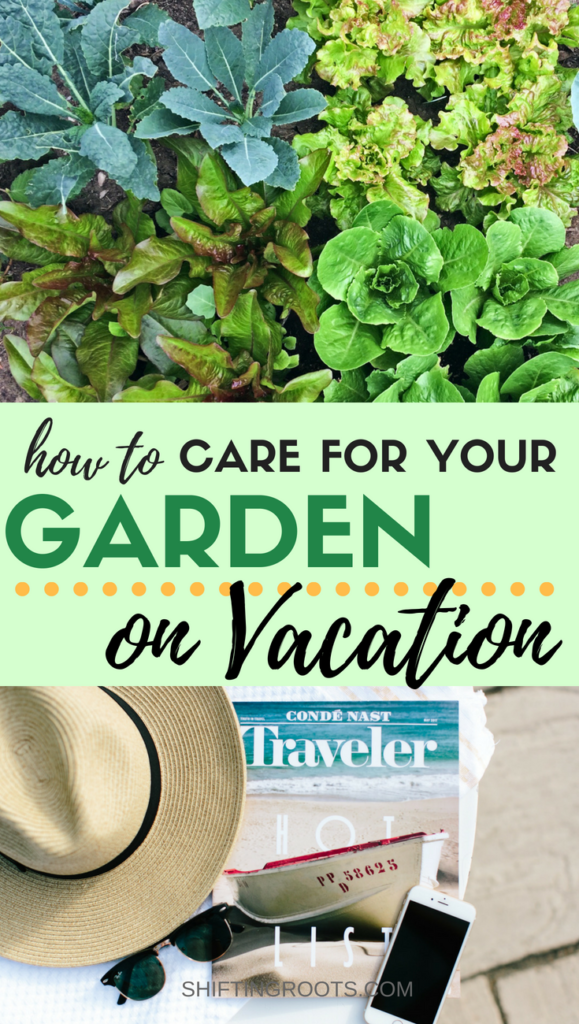 Every gardener faces this dilemma at one point: How do you go on vacation without killing your vegetable garden? I'll show you how to care for and water your plants while you're away, plus give you some tips especially for the beginner. #gardening #summervacation #beginnergardener #vegetablegarden #vegetablegardening #gardeningtips #gardeningadvice #gardeningideas