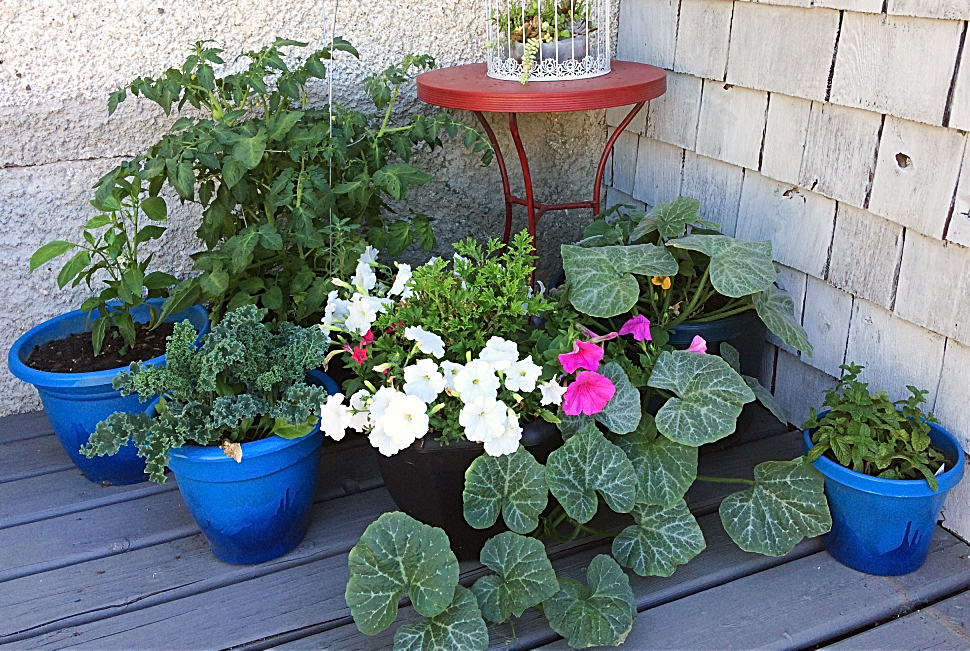 Do you dream of having a container vegetable garden on your patio, balcony, or other small space?  Gardening in pots can be tricky for beginners--here's 8 mistakes you'll want to avoid. #gardening #containergardening #pots #vegetables #vegetablegardening #beginners #plantcare