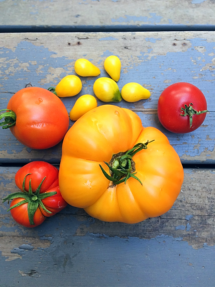 The Foolproof Way to Grow the Best Tomatoes--Even if You're a Beginner Gardener