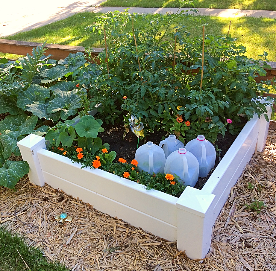 A good raised garden bed idea for a vegetable garden.  It looks good in the front yard! #raisedbed #vinyl #gardening #beginners #vegetable #flower