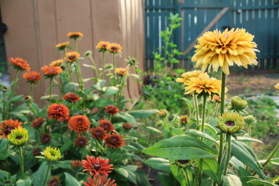 How To Start An Urban Flower Farm On The Cheap