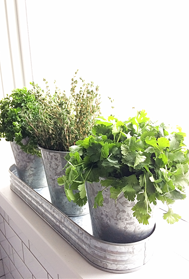 What a cute windowsill herb garden!  You can make your own diy one for your apartment in 5 minutes or less.  Just grab a cute container or planter and I'll show you the rest. #herbgarden #wintergarden #kitchengarden