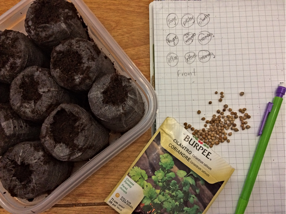 Wouldn't it be nice to start your own diy indoor herb garden from seed?  I'll show you my ideas and what worked well (or not) in zone 3. #herbgarden #indoorgarden #seeds