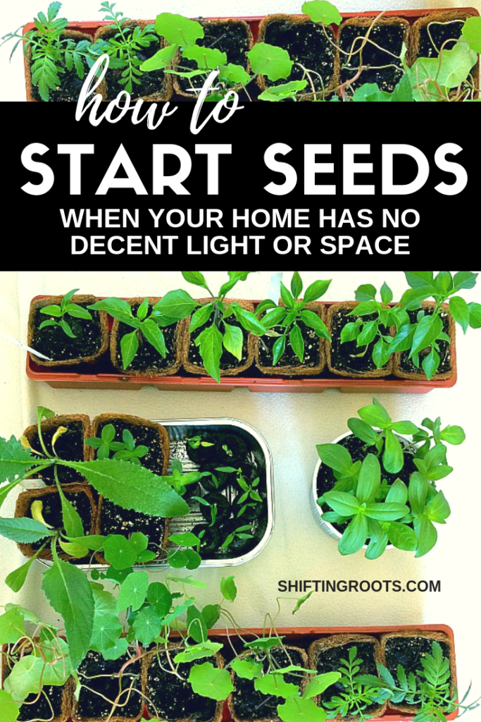 Can you believe there's a way to start seeds, even if you don't have a decent south facing window or live in a small space?  Here's how even a beginner gardener can start perennial flowers, annuals, or even vegetables over the winter and into the spring. #gardening #ideas #seedstarting #seeds #vegetables