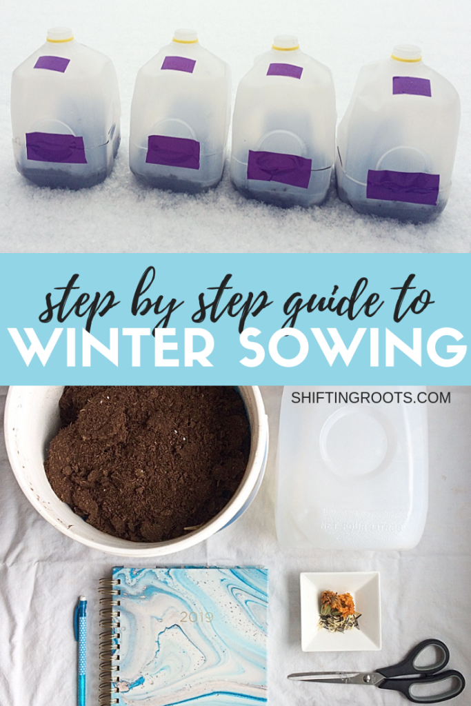 Think you can't winter sow flowers or vegetables just because you live in a cold climate?  I live in zone 3 and I've been able to successfully start seeds using milk jugs.  I'll show you how and give you some ideas for what I'm trying instead this spring. #gardening #wintersowing #ideas #vegetables #flowers