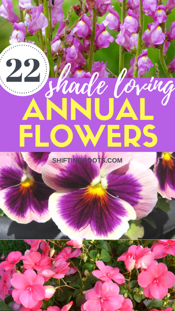 Coming up with a flower garden design can be tricky, especially when it's in a spot with lots of shade.  Here's 22 shade loving annual flowers that are great for front yards, back yards, or containers.  Some even make great cut flowers!