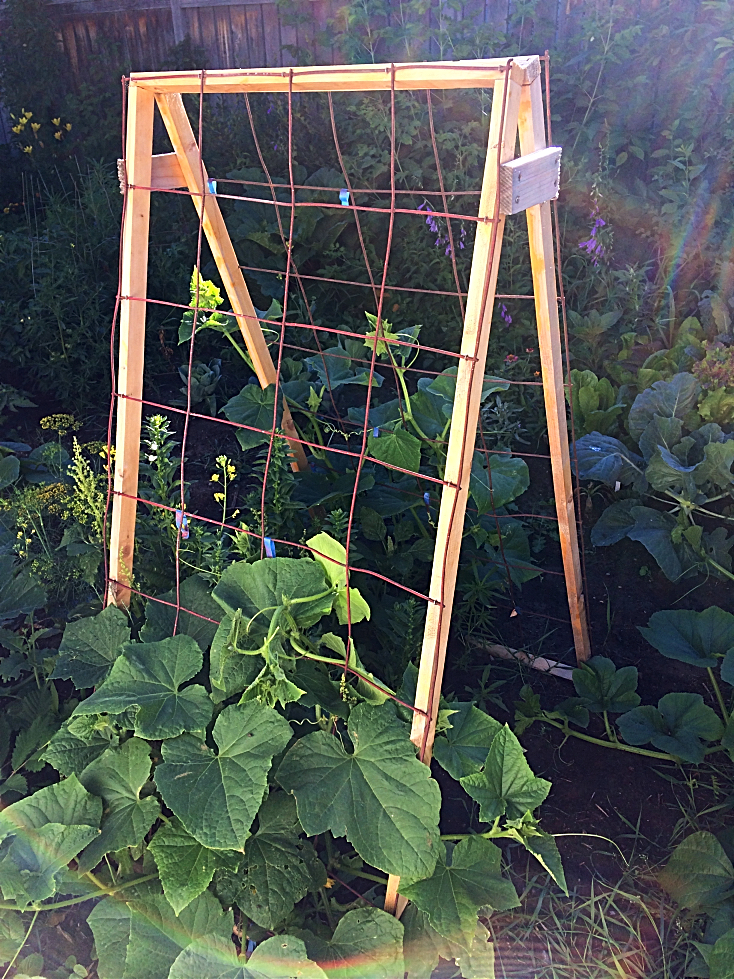 Looking for some ideas to design your patio, backyard, or other small space garden?  Here's some low maintenance ideas for growing vegetables and flowers--many of which are perfect if you're on a budget!  This cucumber trellis was made for under $10. #garden #design #ideas #onabudget #smallspace #patio #backyard