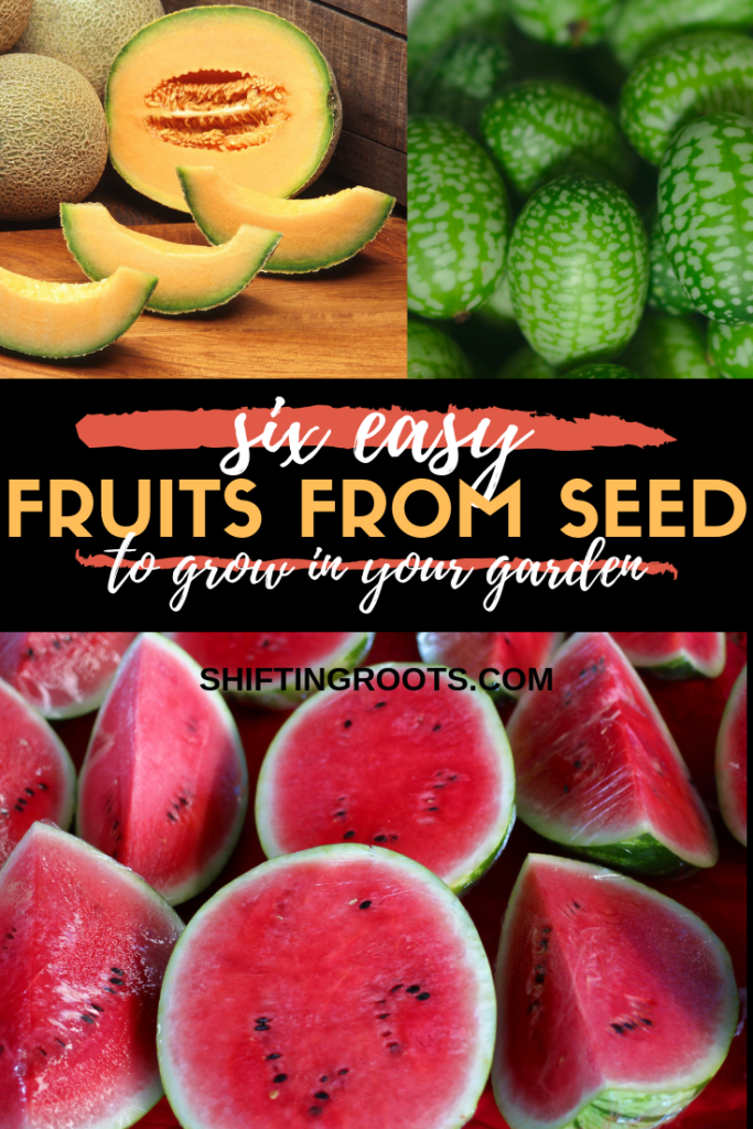 Just because you live in a cold climate doesn't mean your options for growing fruit are limited!  Here's a list of six easy fruits you can grow from seed in your garden or in pots and containers in your backyard. #growingfruit #melons #gardening #hardyfruit #Canada #zone3