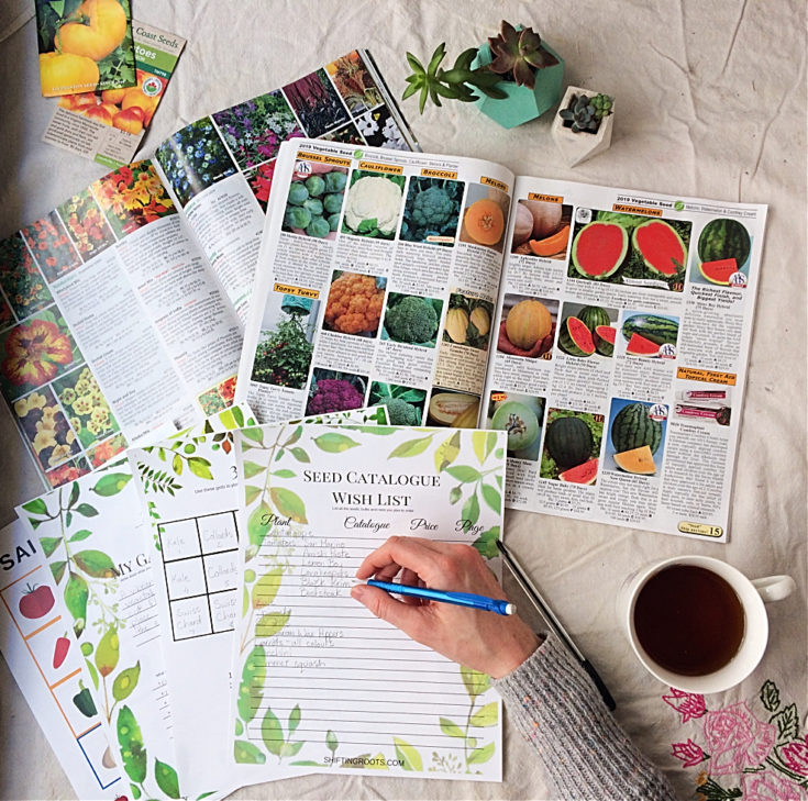 How to Plan Your Garden: Purchasing, Seed Starting, and Planting