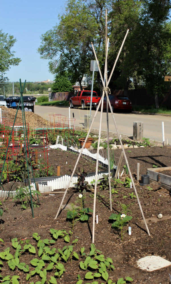 Looking for some ideas to design your patio, backyard, or other small space garden?  Here's some low maintenance ideas for growing vegetables and flowers--many of which are perfect if you're on a budget! These pole bean teepees cost next to nothing to make. #garden #design #ideas #onabudget #smallspace #patio #backyard