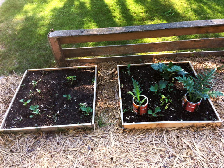 How to Design a Front Yard Raised Bed Vegetable Garden