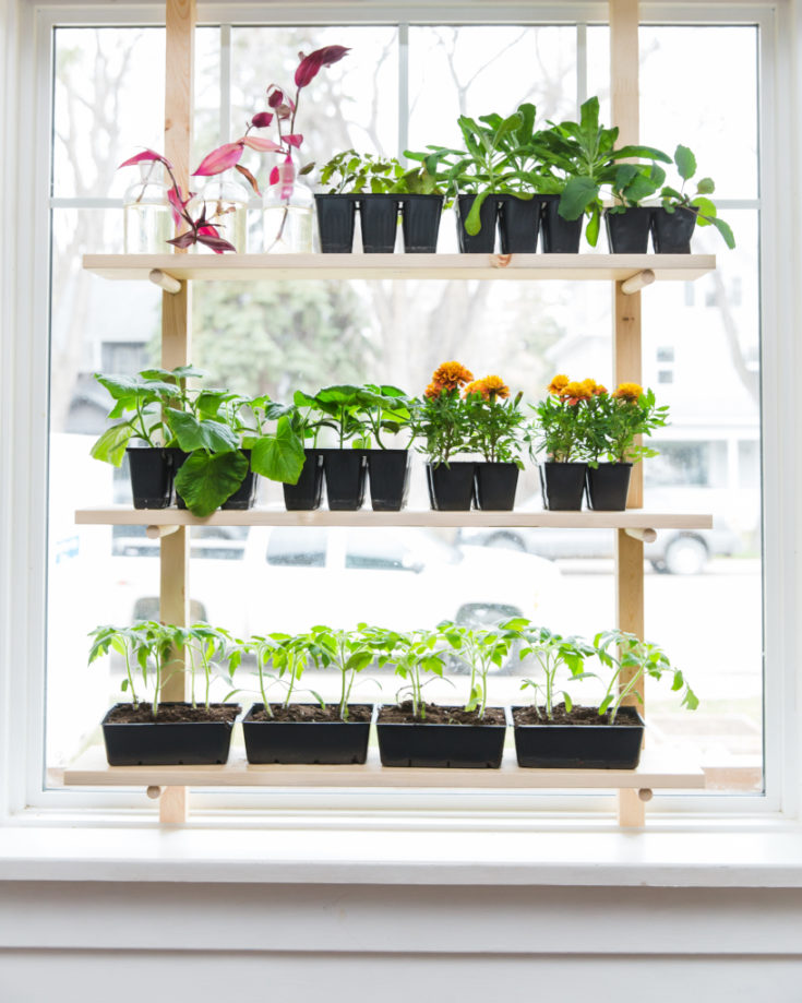 Want to Seed Start But Have No Space?  This DIY Seed Starting Rack for Your Window is the Answer!