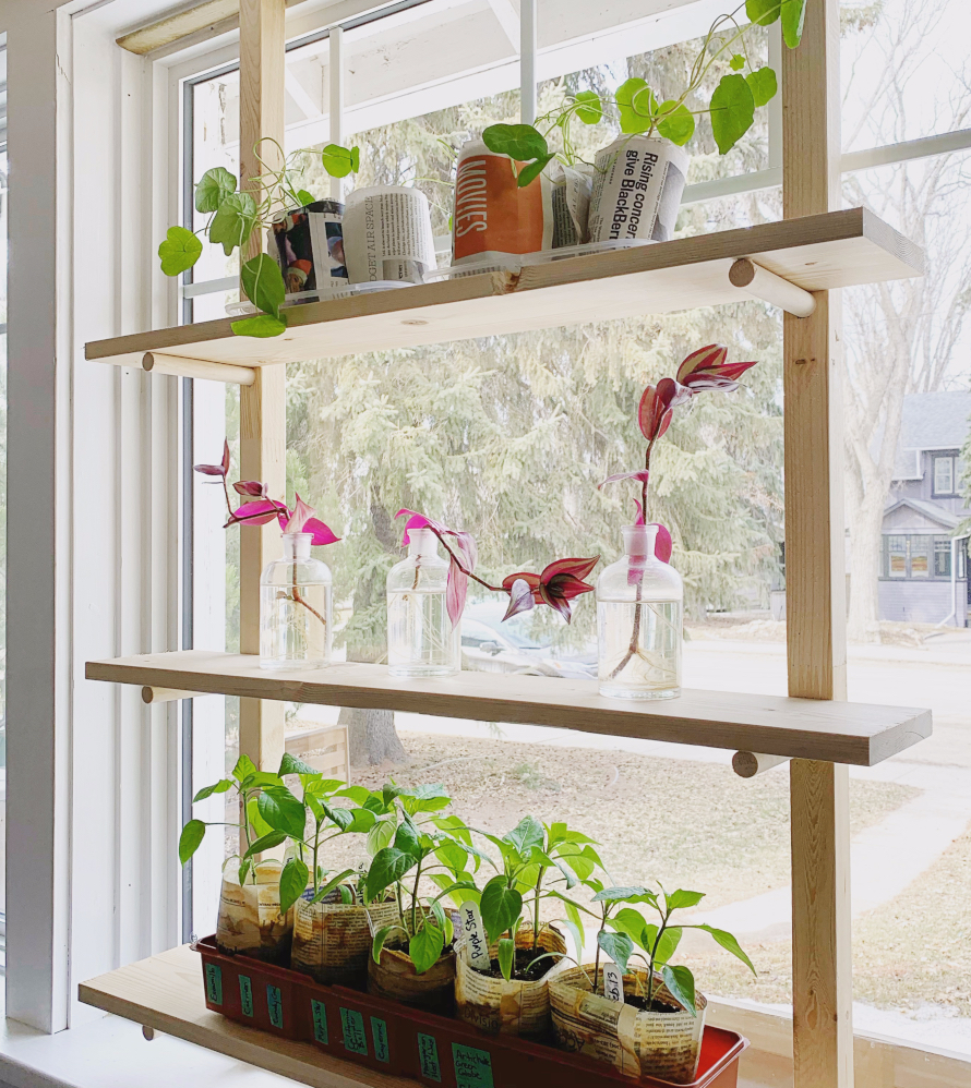 Wish you could seed start indoors, but don't have room for big shelves or grow lights?  If you have a south or west facing window, this removable DIY seed starting rack is the answer!  Build your own shelves according to your window's dimensions and easily remove the whole thing at the end of Spring!  Perfect for your homemade seed starting trays. #seedstarting #DIY