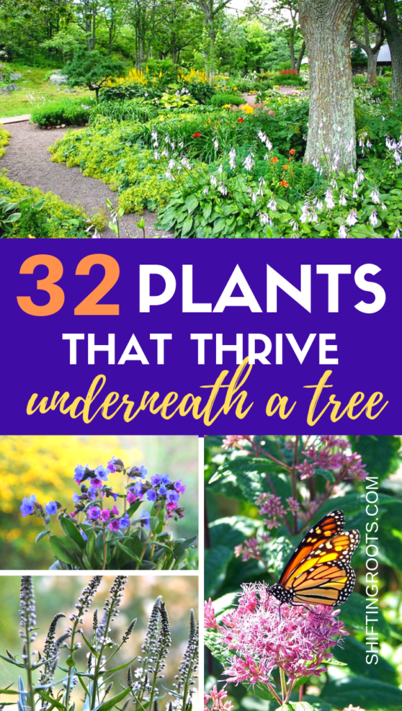 Not sure what to plant when you're landscaping under a tree?  Here's 32 shade friendly perennial flowers, ground cover, annuals, and shrubs that would be beautiful in your front yard or backyard. #landscaping #tree #shade #flowers