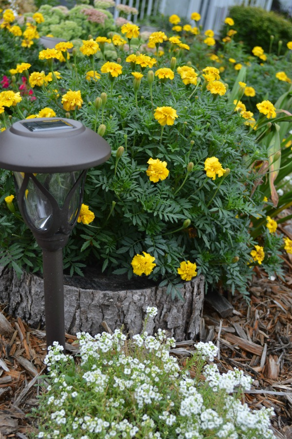 I think whimsical garden art really makes a backyard flower bed.  I love these 20 diy ideas that are either recylcled, upcylcled, or from junk that nobody wants.  I need to do some of these in my outdoor space--Solar lights are so easy. #gardenart #whimsical #flowergarden #landscapingideas