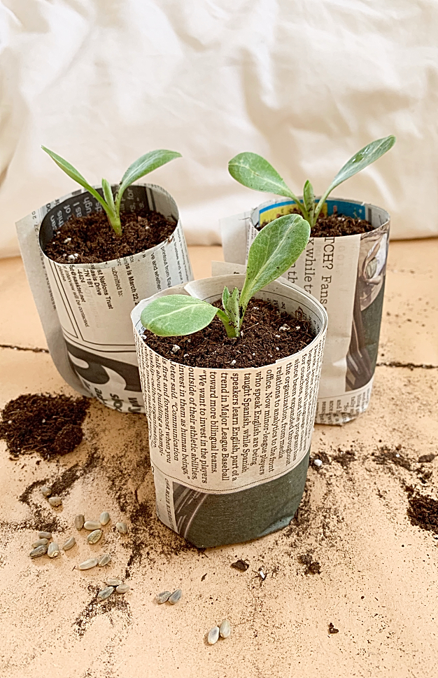 Compostable Newsprint Seed Starting Pots